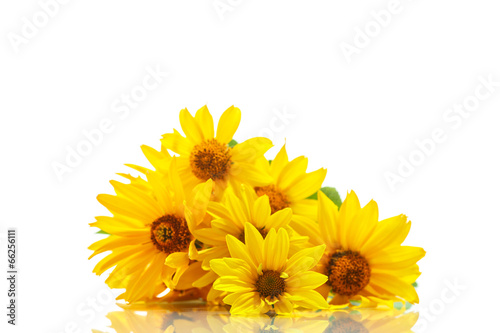 Foto op Canvas Madeliefjes bunch of yellow daisy flowers