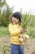 玉ねぎ収穫!