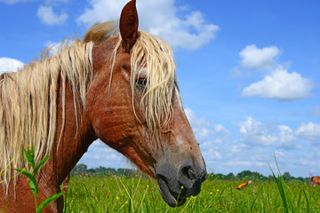 Head of a horse against a pasture.