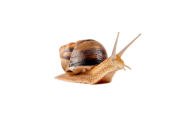 big snail on the white background