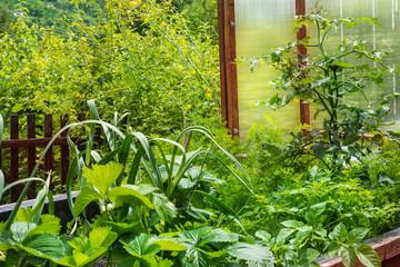 Pflanzen im Hochbeet