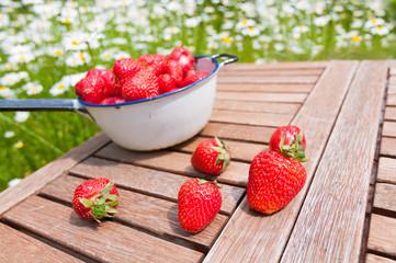 Frische Erdbeeren aus dem Garten