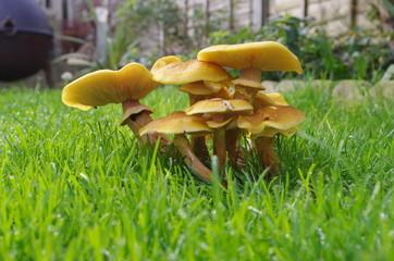clump of mushrooms