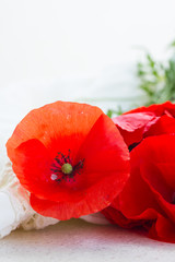 one red poppy flower