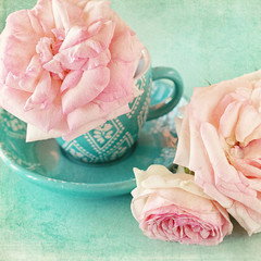 Beautiful fresh pink roses in a cup  on a blue background .