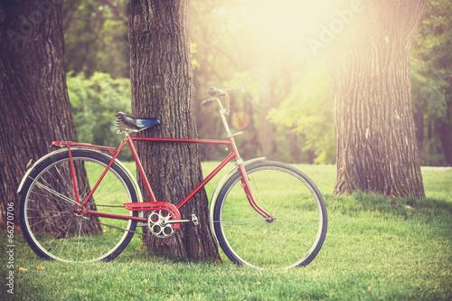 Foto Spatwand Fiets Vintage bicycle waiting near tree