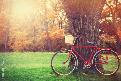 Aluminium Fiets Vintage bicycle waiting near tree
