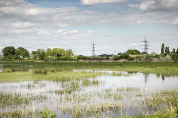 rainham marshes