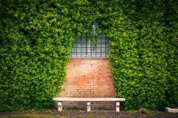Stone bench and ivy background