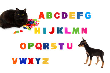 Alphabet, black cat, toy-terrier puppy  on white background