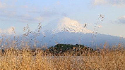 Grass with Mount Fuji, view from Lake Kawaguchiko, Japan