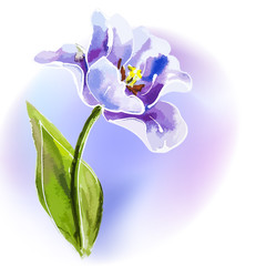 Purple tulip, watercolor painting.