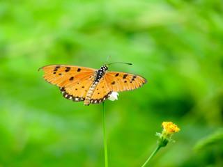 Yellow Butterfly Landing