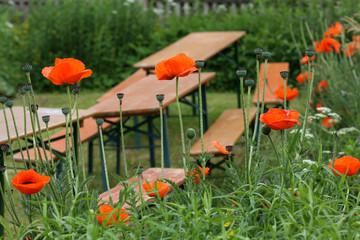 Sommergarten, Bauerngarten, Biergarten,
