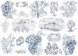 Vine illustration - 66286582