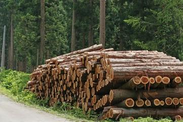 伐採した杉