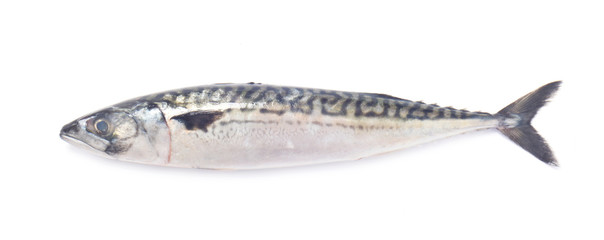 Whole Raw Mackerel