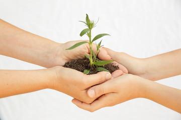 planta en las manos