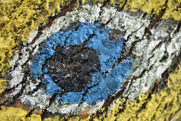 great eye painted on the bark of a tree in the Woods 3