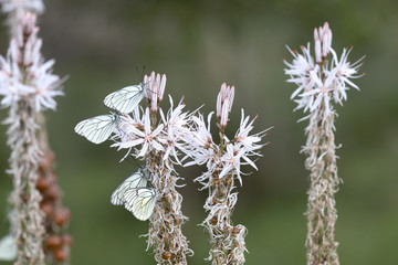 White butterfly on white flower