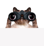 binoculars cat searching, looking and observing with care
