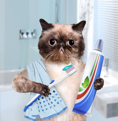 Brushing teeth cat.