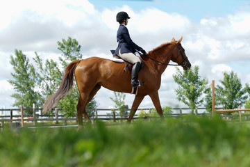 Equestrian horse