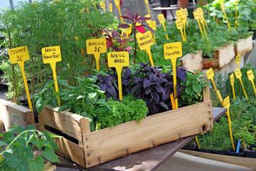 Plantes à potager