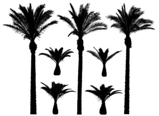Palm Trees Vector Set
