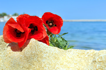 Red poppies on a background of sky and sea