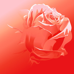 red rose vector - abstract background