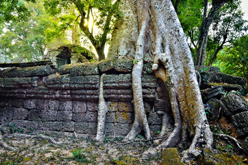Ta Prohm temple in Angkor Wat
