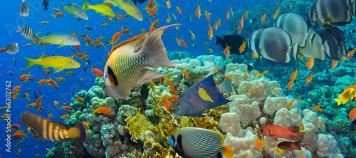 Coral and fish - 66302762
