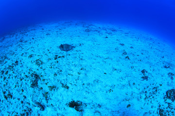 Seafloor of the caribbean sea