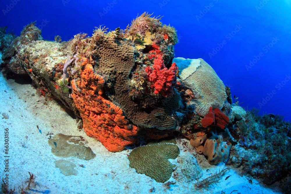 koral karaiby zatoka meksykańska - powiększenie