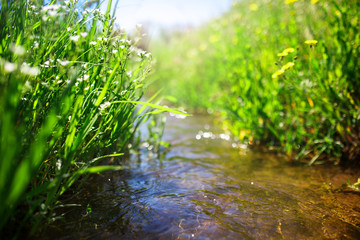 Meadow creek with green grass, summer, close up photo