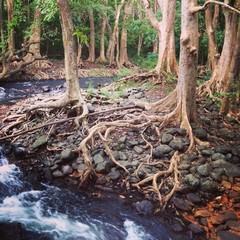Spectacular rainforest of Mauritius