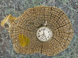 Old pocket watch and rings of a tree stump
