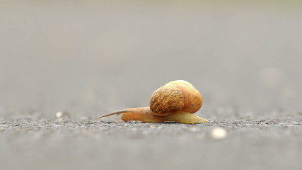 Small snail in the road
