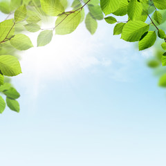 Spring or summer background with branches of green leaves