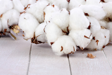 Branches of cotton on wood