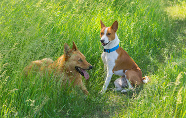 Two young dogs having rest in the morning spring grass