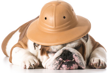 dog wearing safari hat