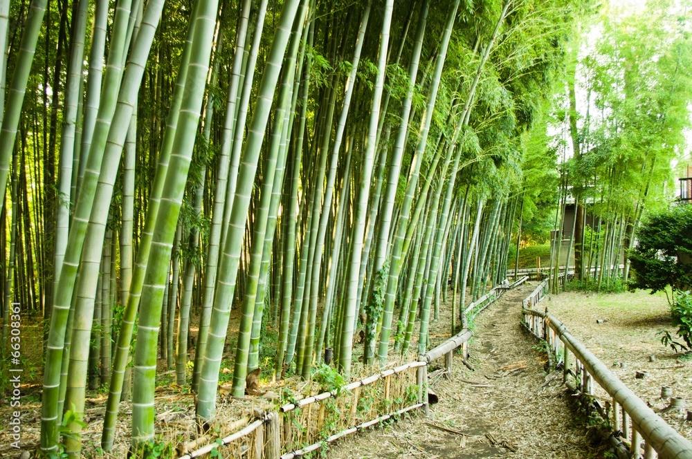 droga ogrodnictwo promień - powiększenie