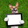dog holding tablet