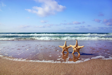 holiday concept - two sea-stars walking on sand beach