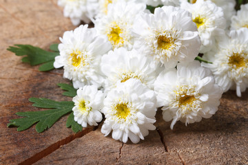 A bouquet of small white chrysanthemums closeup