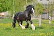 Aragon auf Blumenwiese - 66309765