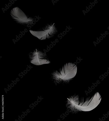 Foto op Plexiglas Zwaan flying white swan feather on the black background