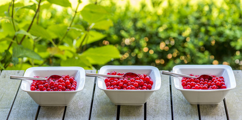 red currant panorama